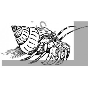 Hermy the Hermit Crab
